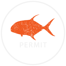 permit fish icon