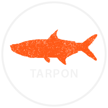 tarpon fish icon